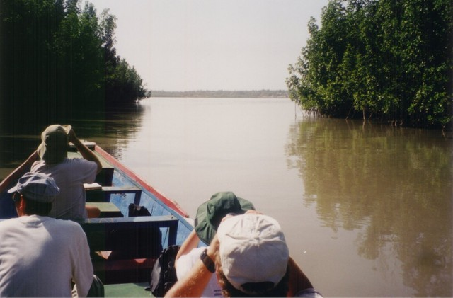 Creek crawl up-river in The Gambia