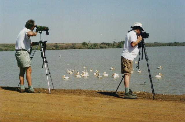 Birding World Heritage wetlands at Djoudj National Park in Senegal