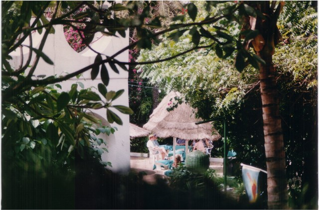 Senegambia Beach Hotel Gardens, home of Snowy-crowned Robin chat and Beautiful Sunbirds